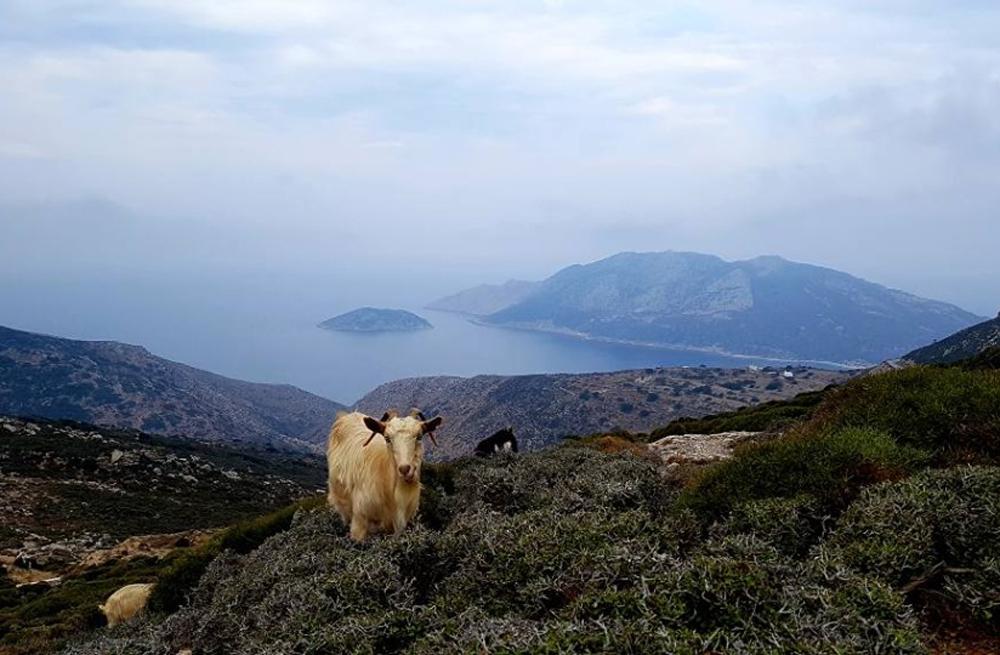 Amorgos self-guided walking 4