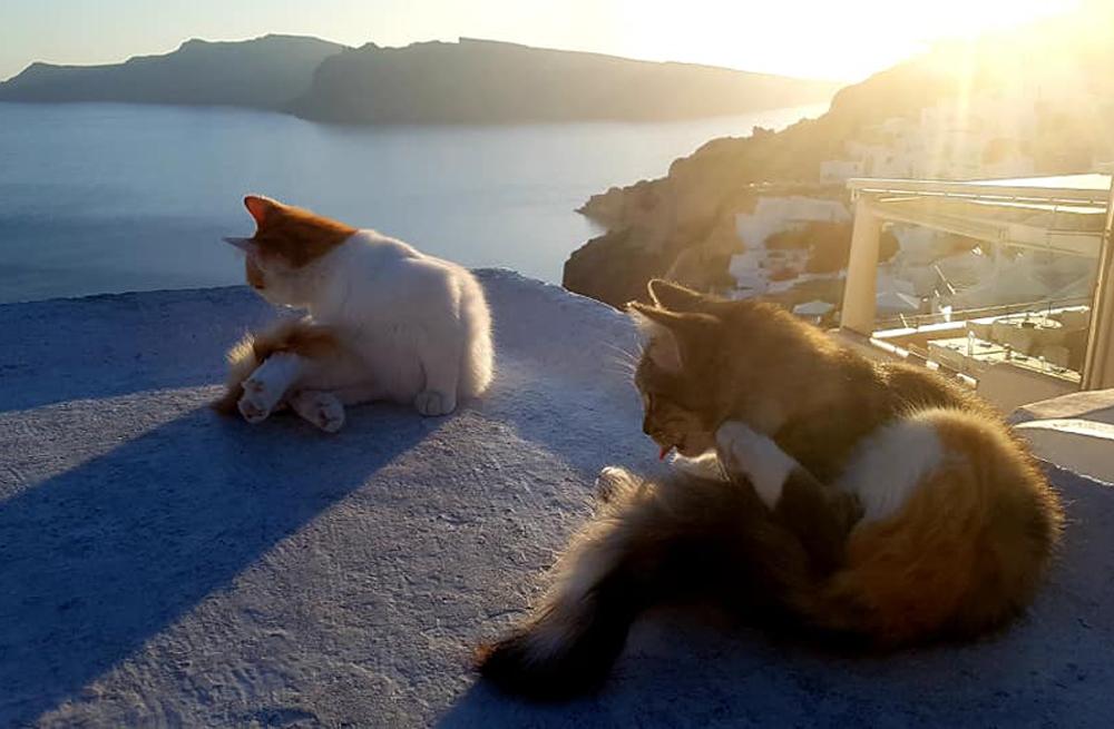 Amorgos self-guided walking 5