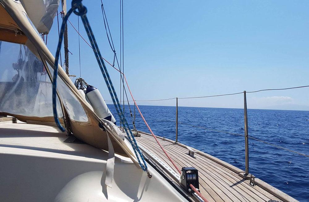 Cyclades wildlife sailing 6