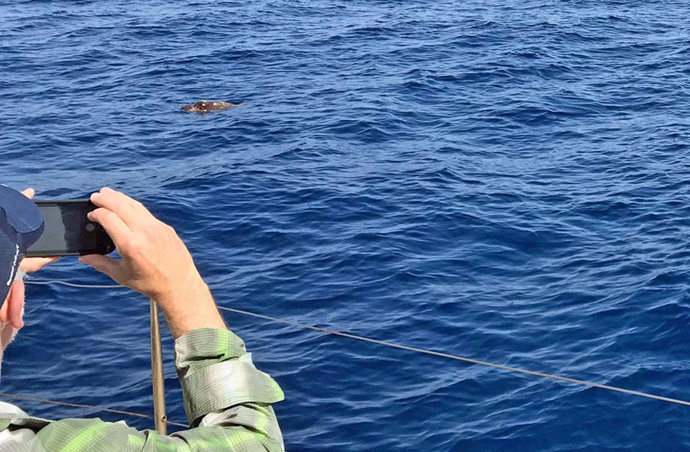 Cyclades wildlife sailing 9