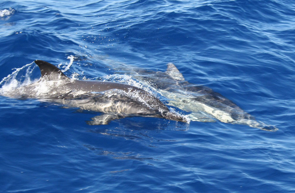 Cyclades wildlife sailing holiday 10