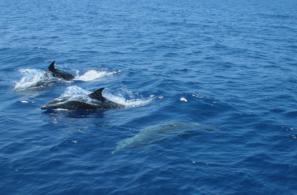 Cyclades wildlife sailing holiday 11