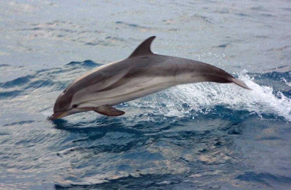 Cyclades wildlife sailing holiday 12