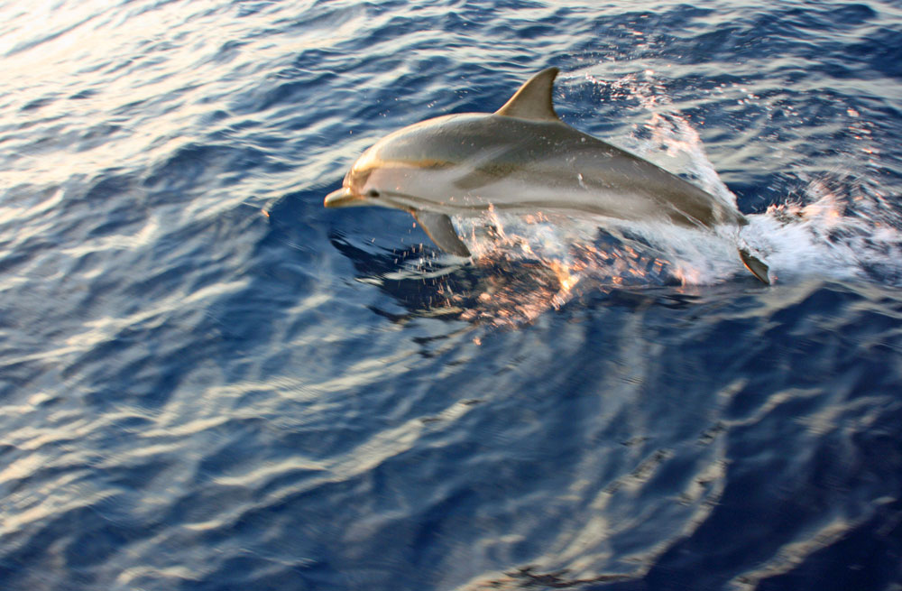 Cyclades wildlife sailing holiday 14