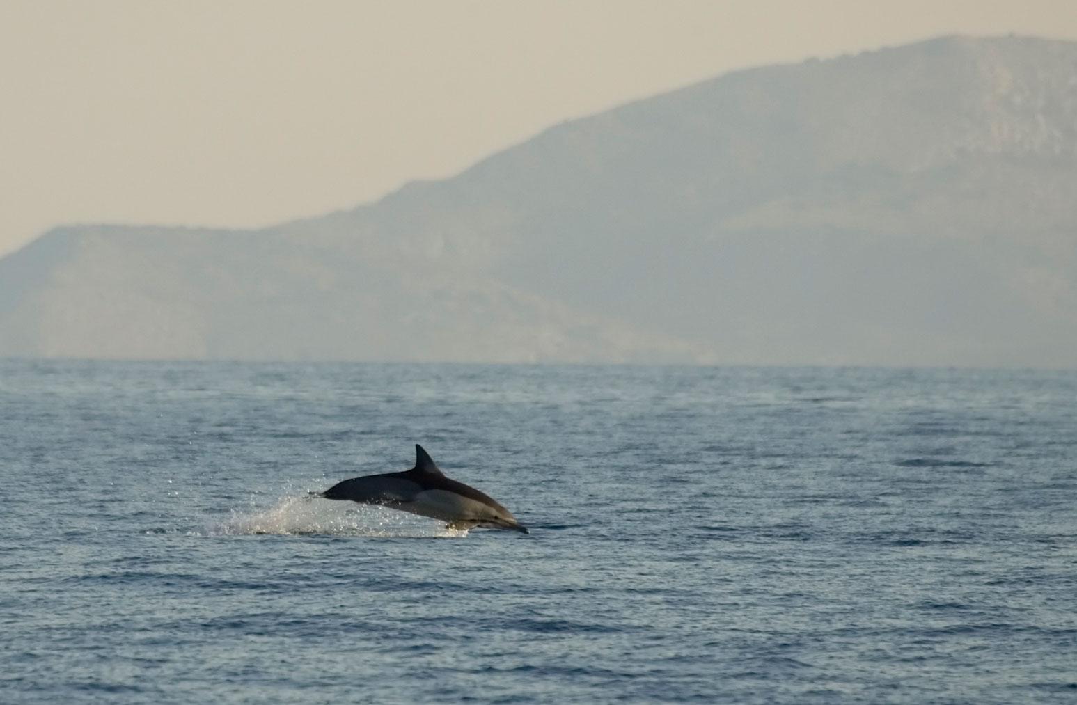 Cyclades wildlife sailing holiday 4